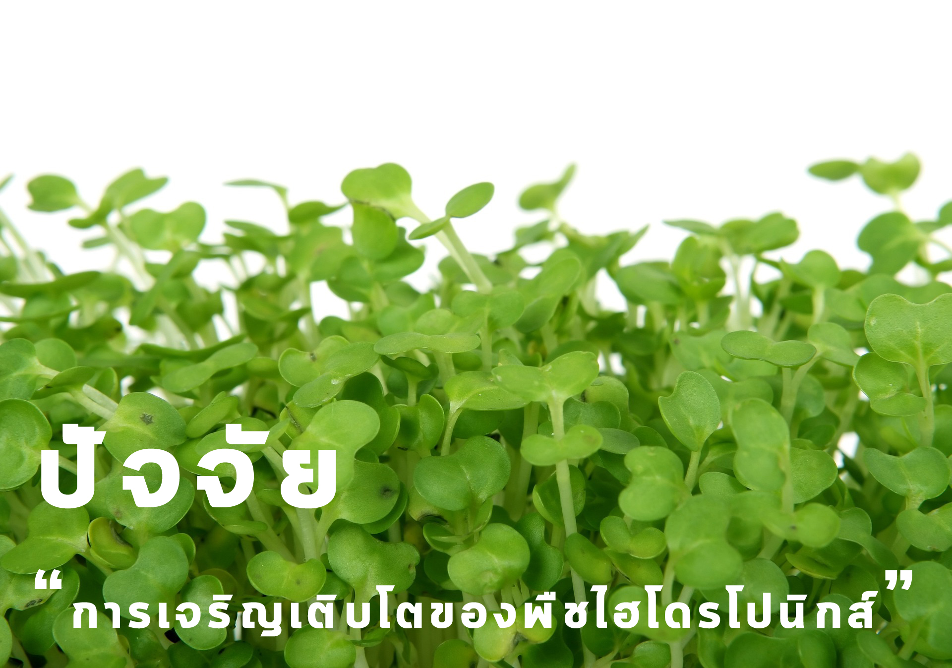 ปัจจัยการเจริญเติบโตของพืชไฮโดรโปนิกส์