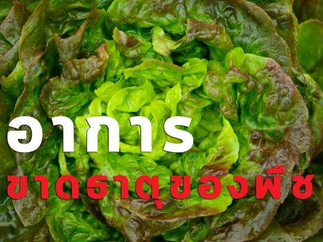 อาการขาดธาตุอาหารของพืช
