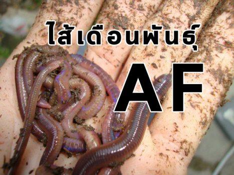 ไส้เดือนดินพันธ์ุ AF