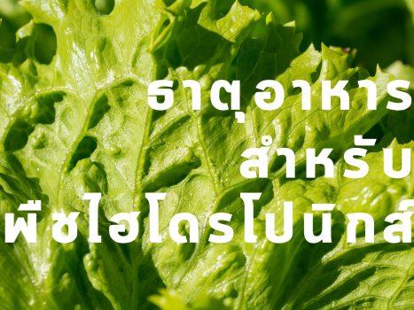 ธาตุอาหารสำหรับพืชไฮโดรโปนิกส์