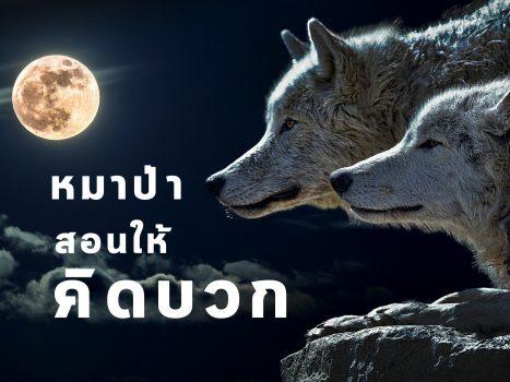 หมาป่าสอนให้คิดบวก