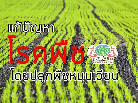 แก้ปัญหาโรคพืชด้วยการปลูกพืชหมุนเวียน